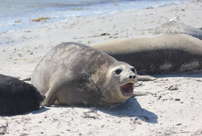 Unique Falklands, South Georgia, Antarctica Land & Sea Combo 26 days