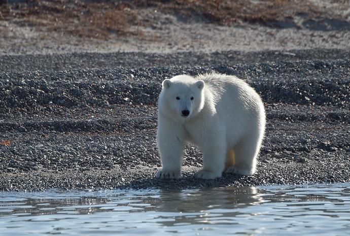 North West Passage in Luxury 23 days
