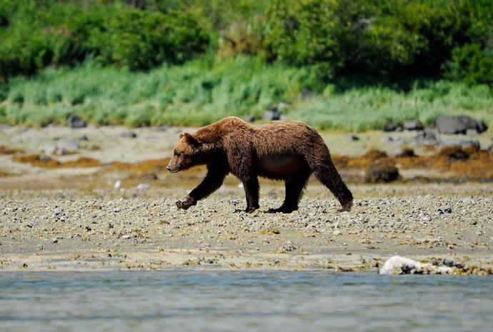 Alaska & Russian Far East in Luxury 17 days