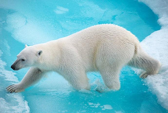 Scotland, Jan Mayen & Spitsbergen in Luxury 12 days