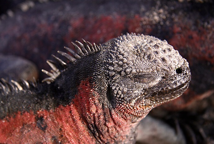 Galapagos East & West with Scuba Option 8 days