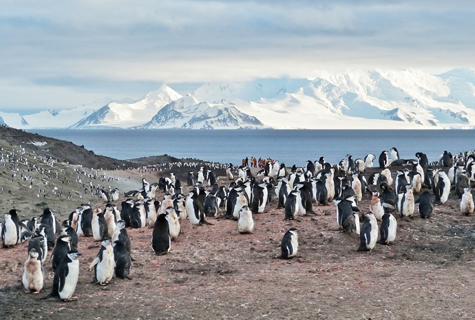 The Antarctic Circle in Luxury 15 days