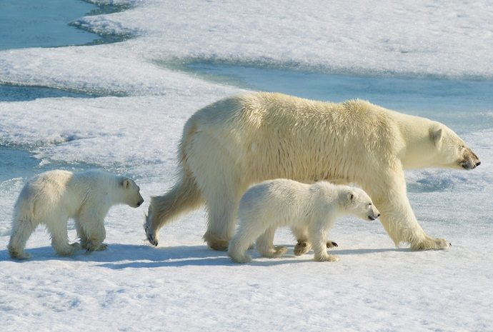 Svalbard Exploration 11 Days