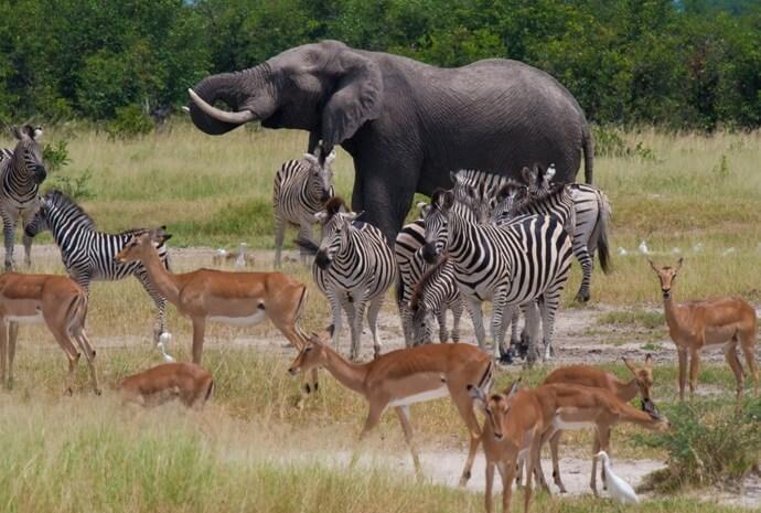 Botswana & Victoria Falls 9 Days Green Season