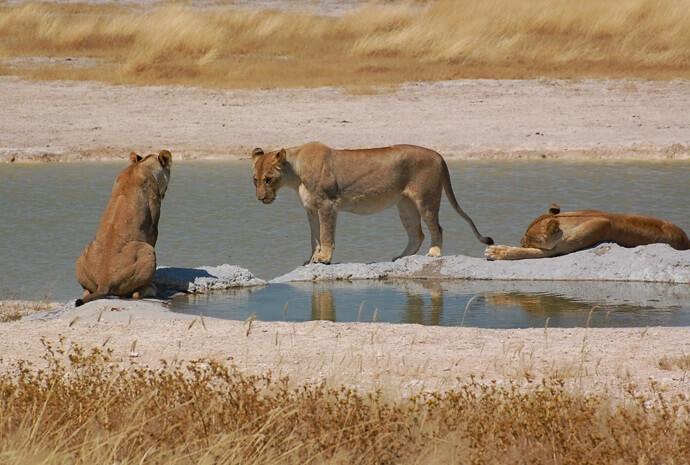 Namibia, Bostwana & Victoria Falls Camping Adventure 19 Days - Small Group, Max 14 Pax