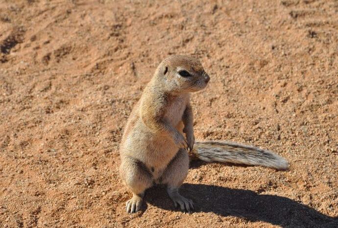 Wild Namibia Family Camping Adventure 10 Days