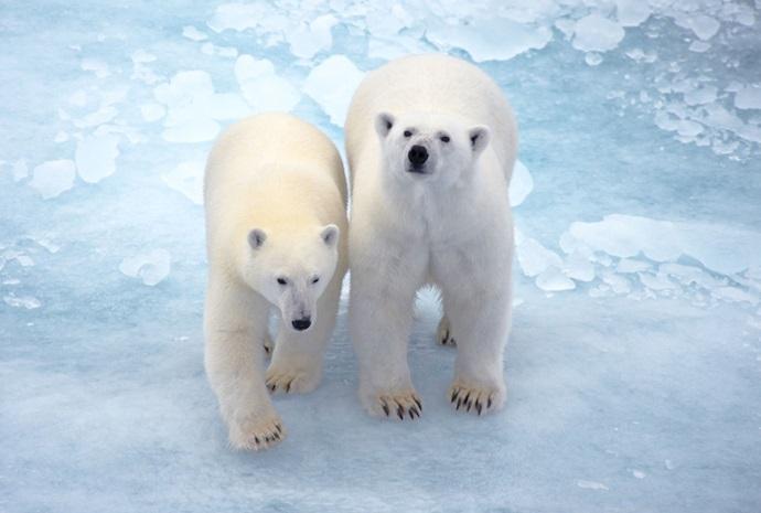 Polar Bear Special - Around Spitsbergen in Luxury 13 Days