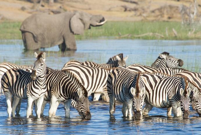 Botswana Zebra Migration Special 7 Days