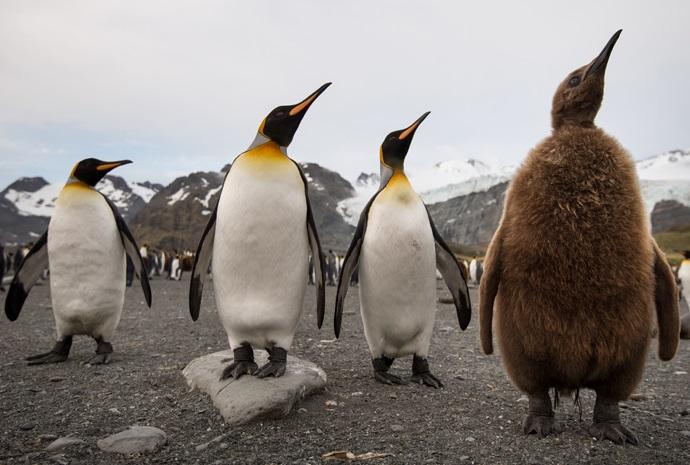 Luxury Falklands, South Georgia & Antarctica 21 days