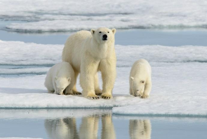 Spitsbergen Odyssey 11 days