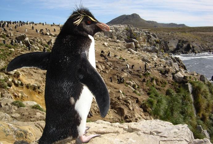 Falkland Islands - Expert Led Small Group Tour 16 Days Max 8 Passengers