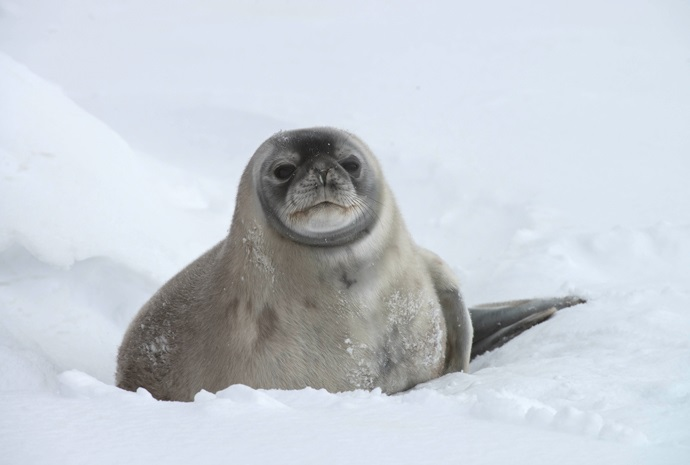 Express Antarctic Peninsula in Luxury 11 days