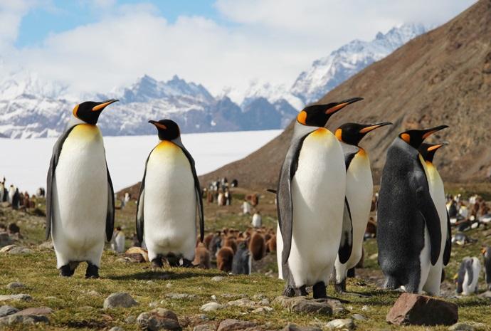 Falklands, South Georgia & Antarctica 23 days