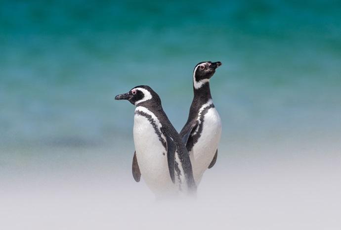 Antarctica, Patagonia & Falklands Special 17 Days