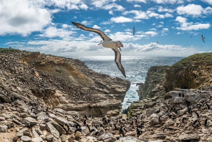 Antarctica & Falklands Special 17 Days