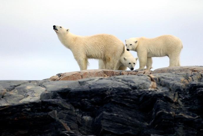 Circumnavigation Spitsbergen 10 days