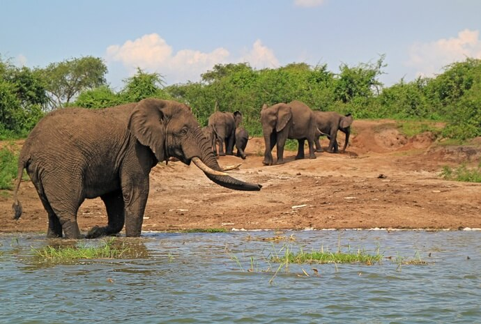 Classic Uganda Safari in Luxury 14 Days