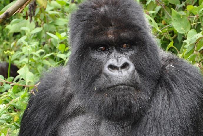 Rwanda Gorilla Trekking 4 Days