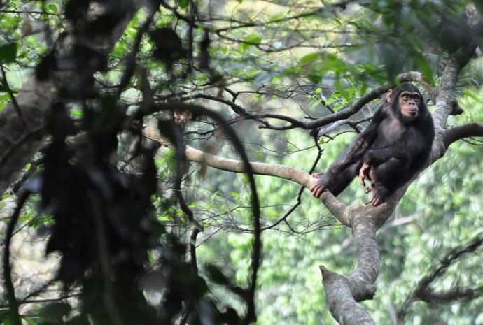 Rwanda Primate Safari 7 Days
