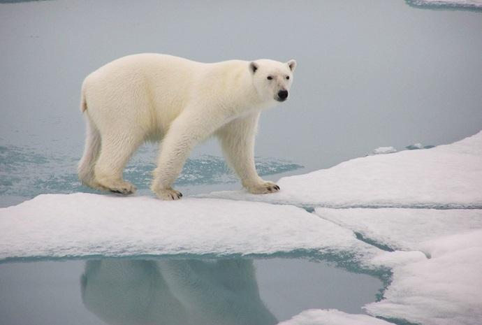 North Spitsbergen Arctic Summer by Sailing Ship 8 days