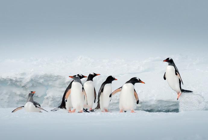 Antarctic Express Cruise/Fly 6 days