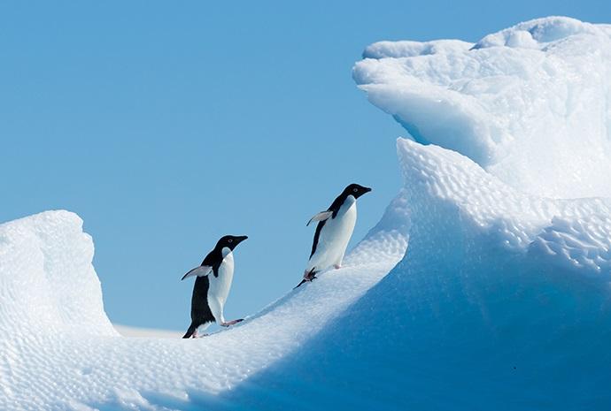 Antarctic Express Cruise/Fly 7 days