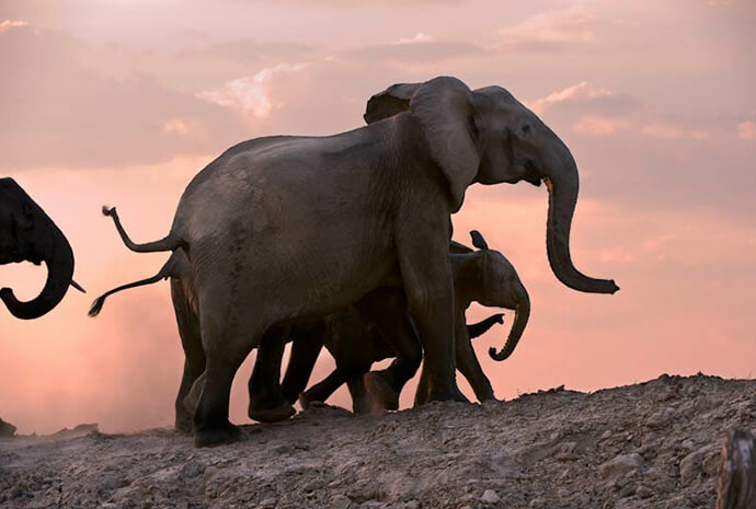Wild Zambia Walking Safari 7 Days