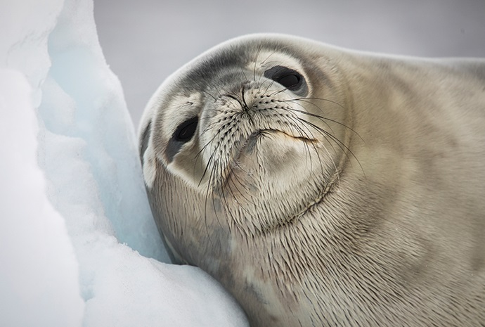 Christmas in Antarctica & The Falklands 12 days