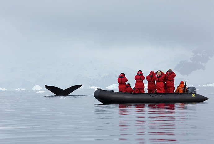 Antarctica Marine Mammals Special 11 days