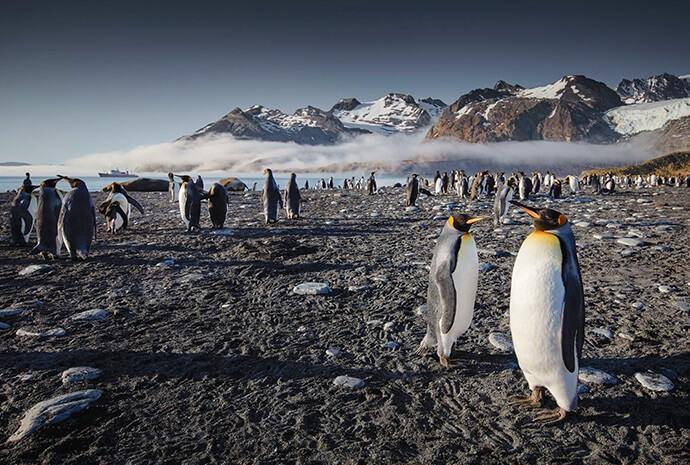 Christmas South Georgia & Antarctic Odyssey 21 days