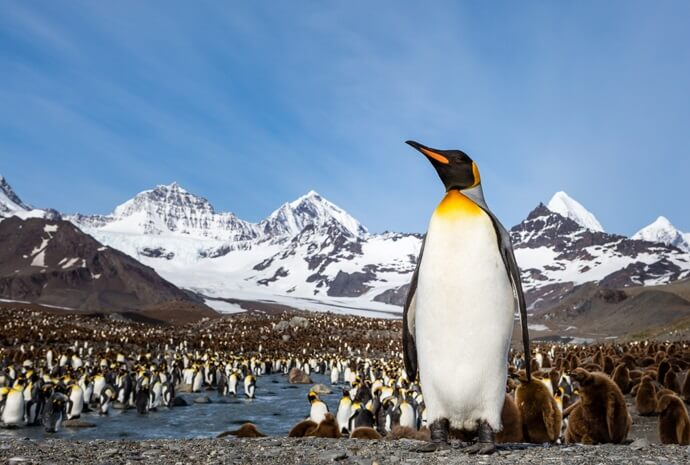 South Georgia & Antarctic Odyssey 22 days