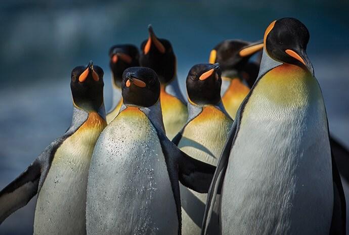 Antarctica, Falklands & South Georgia 21 days