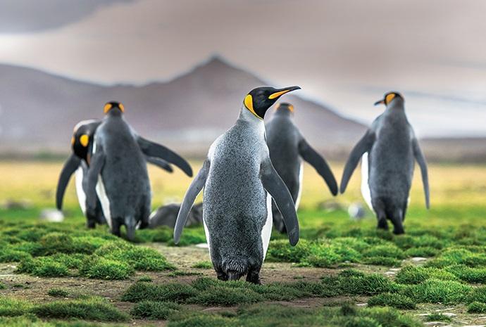 Falklands, South Georgia & Antarctica + Circle 23 days