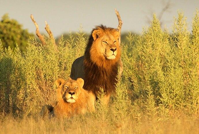 Botswana Northern Highlights Small Group Max 6 Mobile Safari 10 Days