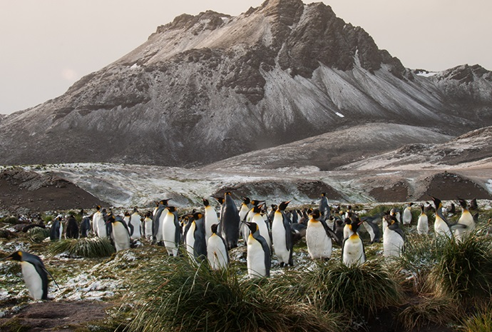 Falklands, South Georgia and Antarctica 19 Days