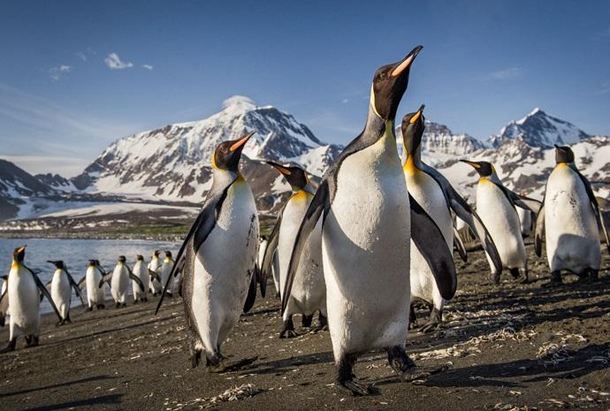 Luxury Falklands, South Georgia & Antarctica 17 Days