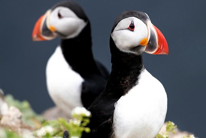 Scotland, Iceland & Spitsbergen in Luxury 12 Days