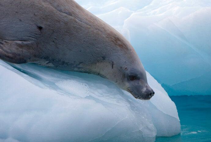Antarctica Classic 11 days