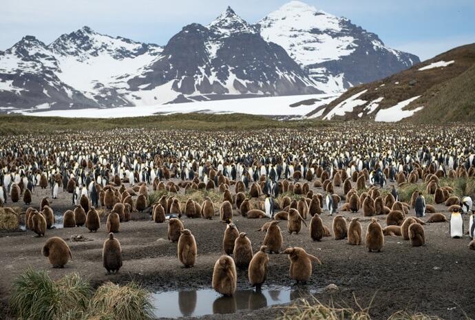 Luxury Falklands, South Georgia & Antarctic Islands 24 days