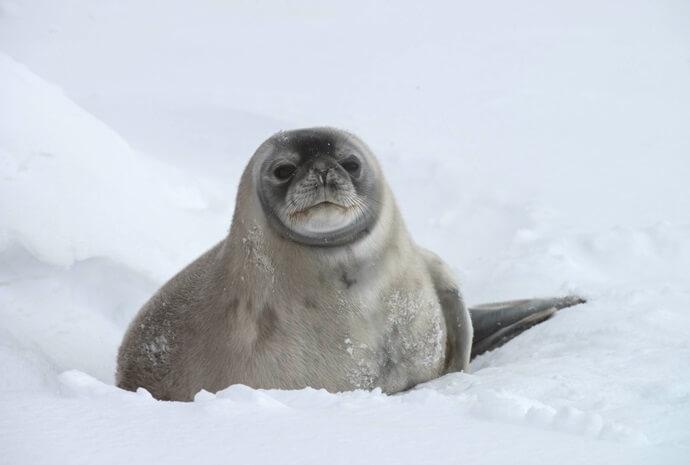 The Antarctic Peninsula in Luxury 13 days