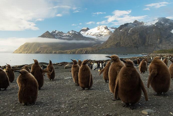 Luxury Falklands, South Georgia and Antarctic Peninsula 22 days