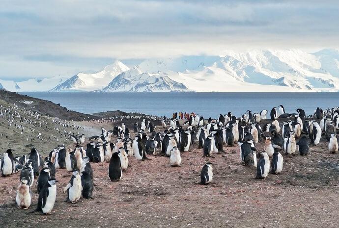 The Antarctic Circle in Luxury 15 days