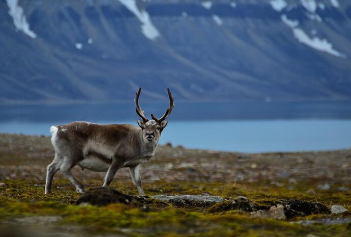 Isfjorden in Autumn Sailing Adventure + Aurora Borealis 8 Days