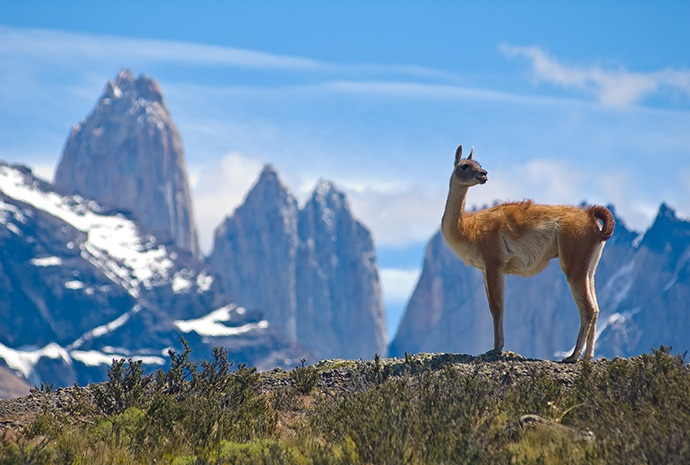 The Chilean Fjords & Patagonia by Sea 14 Days