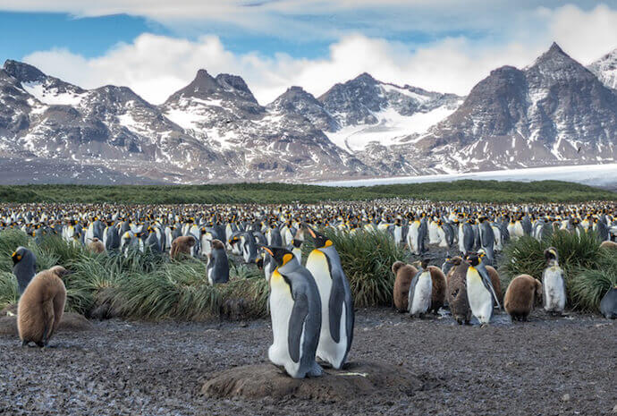 Antarctic Circle via Falklands & South Georgia 23 days