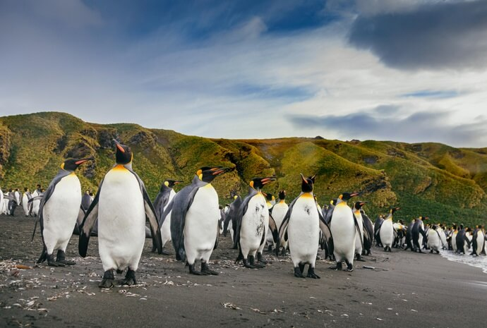 Falklands, South Georgia and Antarctic Peninsula 20 days