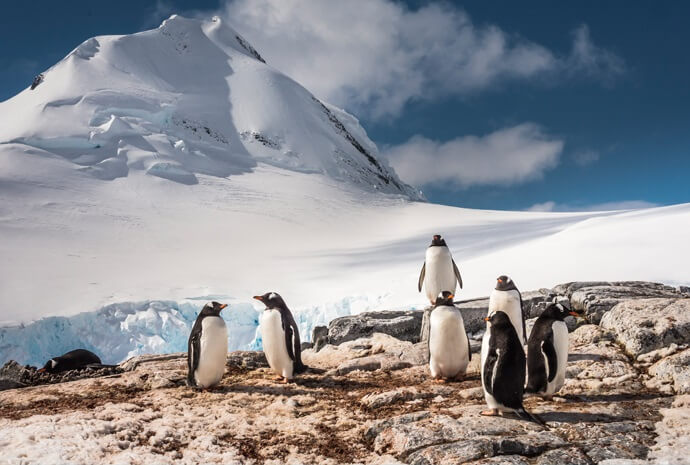 Antarctica & South Shetlands Discovery Voyage 11 days
