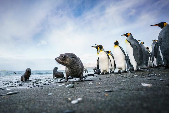 Falklands, South Georgia and Antarctic Peninsula 21 days
