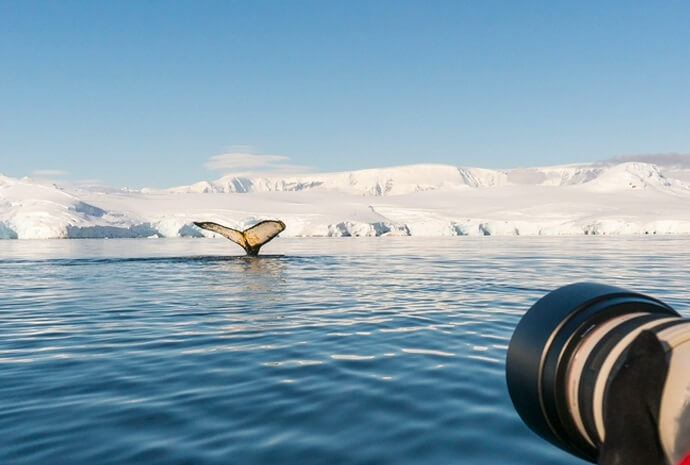 Antarctica & Polar Circle Whale Watching Special 13 days