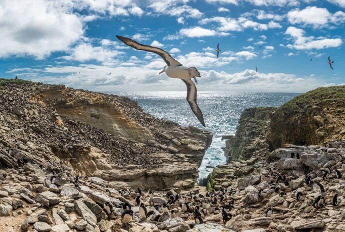 Antarctica, Patagonia & Falklands Special 19 Days